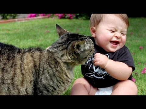 funny baby annoying cat