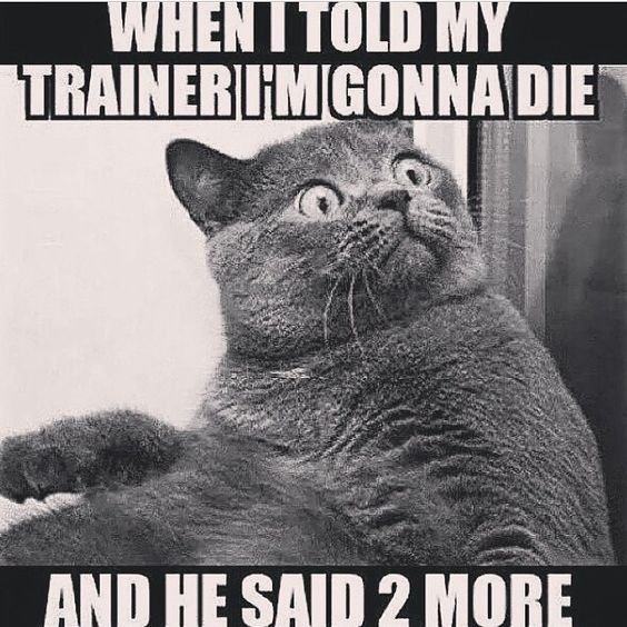 hilarious gym quotes